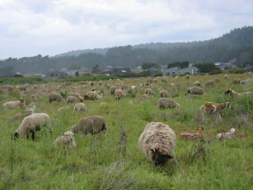 Sheep2tsr